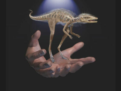 dinosaurio pequeño teléfono celular