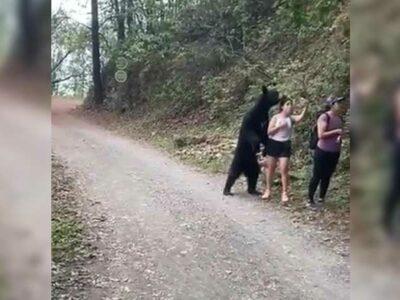 En Nuevo León, selfi de joven con oso circula en rede sociales