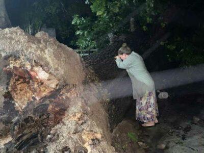 Nuevo León: mujer llora porque Hanna tiró un árbol de 100 años