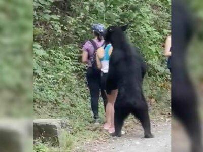 Nuevo León: juntan firmas para que oso de Chipinque no vaya a zoológico