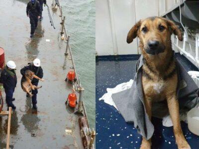 Rescatan a perrito perdido en aguas de la Bahía de Concepción, en Chile