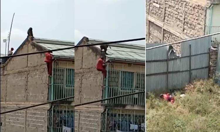 Babuino casi mata a hombre tras hacerlo caer de edificio en Kenia