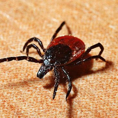 Qué es la enfermedad de Lyme que han padecido famosos
