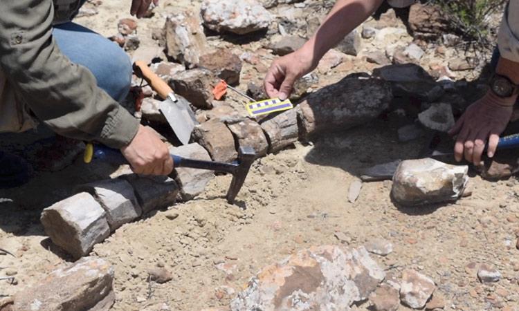 Descubren nuevo dinosaurio en Coahuila, México