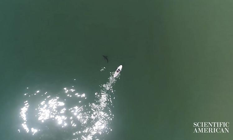 drones imágenes de tiburones