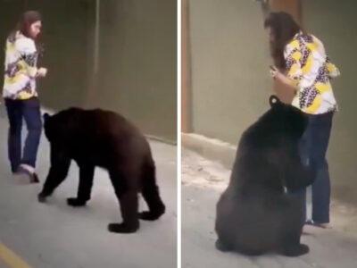 Nuevo León: otra aparición de un oso sorprende redes