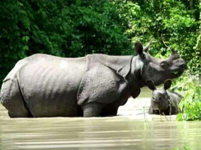 Con la mayor parte del parque bajo el agua, los animales luchan por sobrevivir.