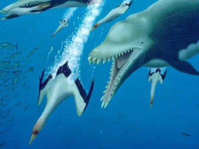 esqueleto de delfines depredadores