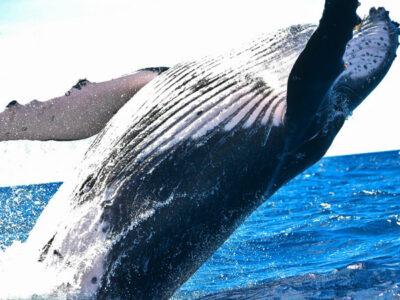 dia de las ballenas y delfines