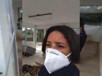 En Yucatán, mujer policía salva a perro de abejas