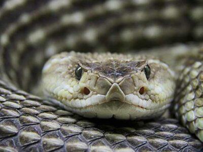 Las serpientes han tenido un simbolismo y una relevancia para las diferentes culturas.