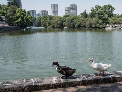 CDMX destina presupuesto para recuperar Bosque de Chapultepec