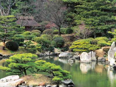 Hiroshima: el mensaje de paz de los árboles sobrevivientes a la bomba atómica