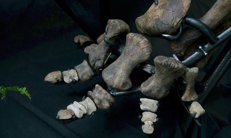 Científicos descubren cáncer maligno en hueso de dinosaurio