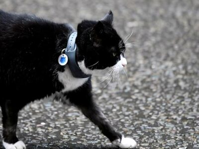 En el día internacional del gato, la ciencia responde cinco preguntas sobre ellos