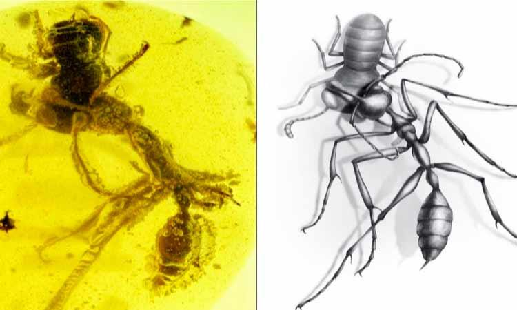 fósil hormiga del infierno