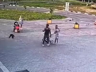 Cuervo sorprende a ladrón y roba parte de su botín en Bielorrusia
