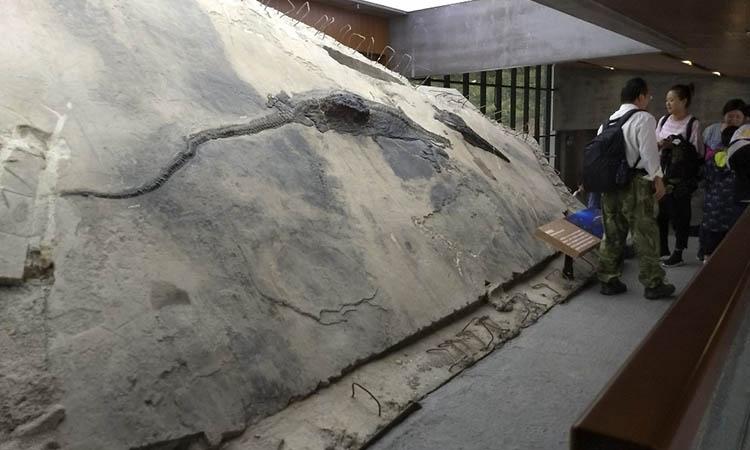Encuentran esqueleto de talatosaurio de cuatro metros en el estómago de un lagarto pez prehistórico