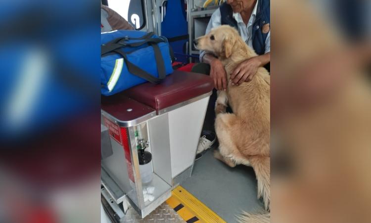 Querétaro: Viejito se desmaya y su perrito no lo abandona