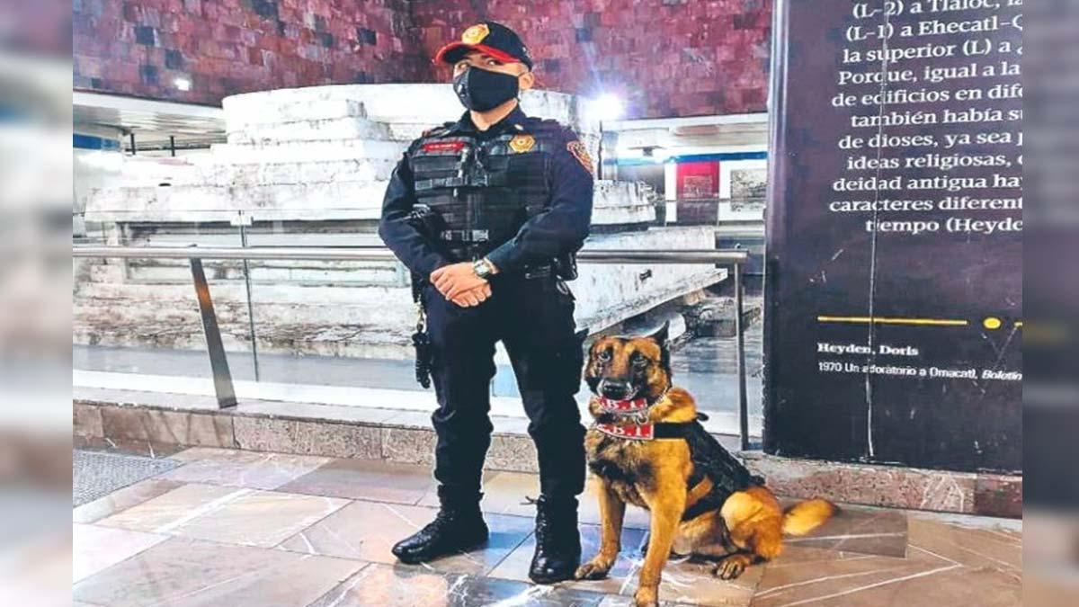 Metro de CDMX: los perritos que vigilan las instalaciones