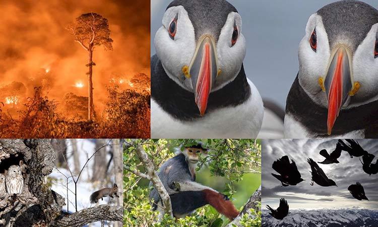 premio fotógrafo de vida silvestre 2020