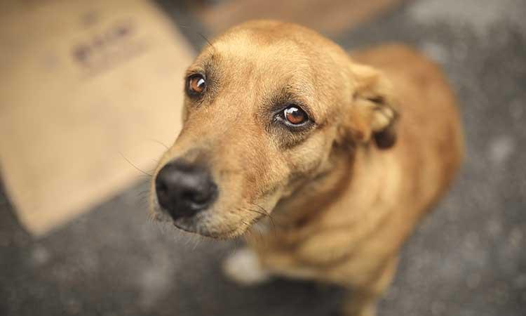 Tamaulipas prohíbe corte de cola y orejas a mascotas