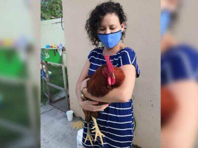 Tamaulipas: mujer compra tapa de huevo y un pollito venía en un cascarón