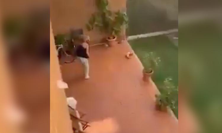 Maltrato animal: mujer es captada cuando azota contra el piso a su perrito