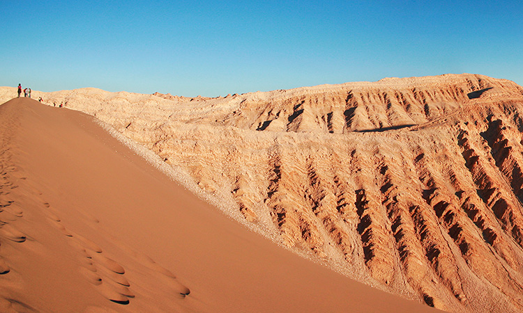 dinosaurios marinos desierto