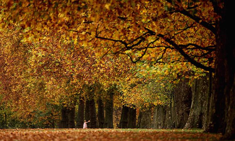 tipos de otoño