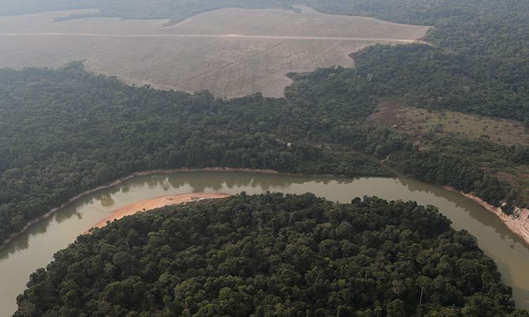 El Amazonas, en riesgo de cambiar su ecosistema