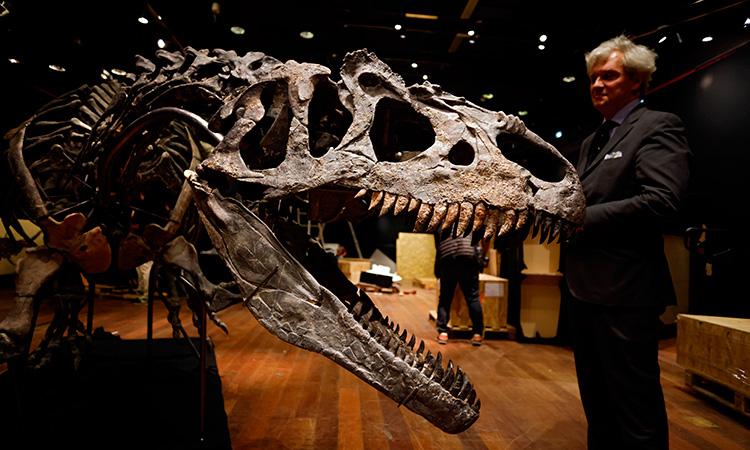 Allosaurus Abuelo Del T Rex Subasta