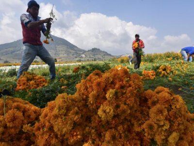 Flor de cempasúchil en Día de Muertos: ¿Qué significa y representa?