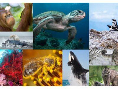 Animales que están al borde la extinción