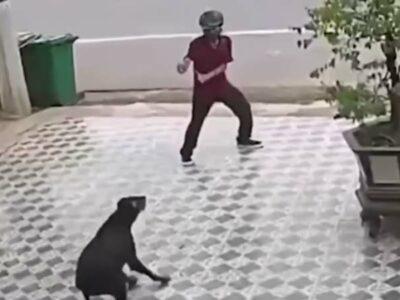 """Se salva de ataque de perros al estilo de """"Karate Kid"""""""