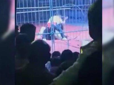 Oso ataca a su domador en pleno show circense en China