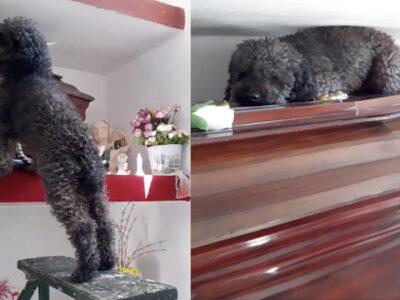 Intenta no llorar: perrito va a tumba de dueña