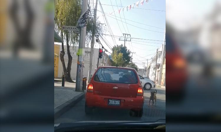Automovilista abandona perrito y éste la persigue