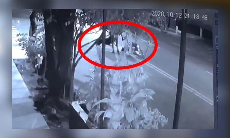 Video: momento en que pitbull y rottweiler atacan a perritos de CDMX