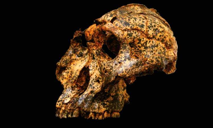 Descubren cráneo humano