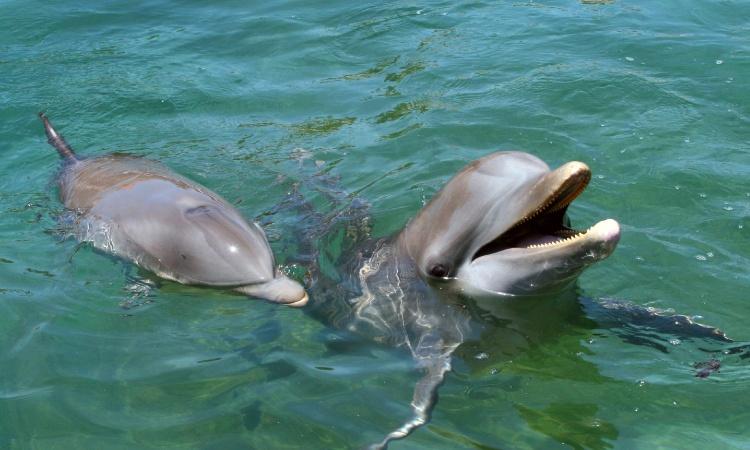 delfines rescatados en caborsa, sonora