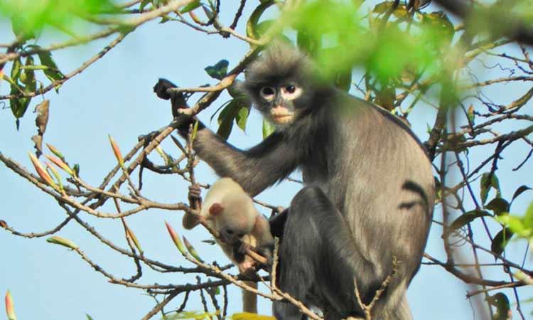 nuevo primate