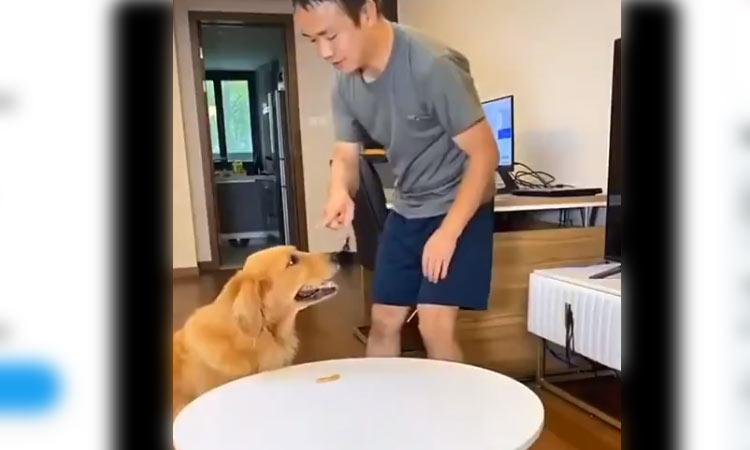 Perrito se come golosina y engaña a su dueño con astuto truco