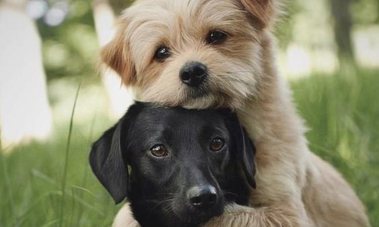 Conoce a Knut, el perro más tierno del mundo; mira su video aquí