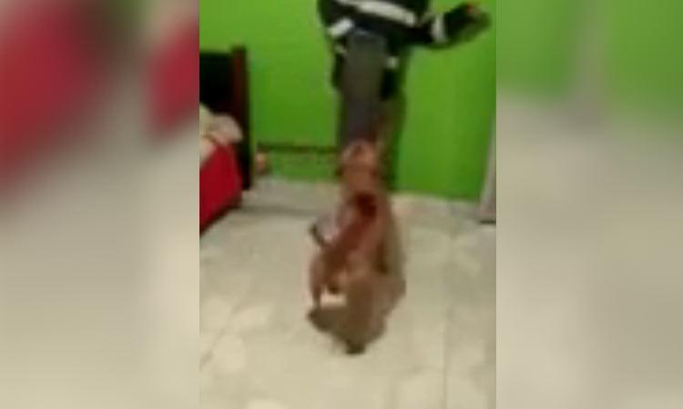 Perrito ataca a su dueño con machete en el hocico