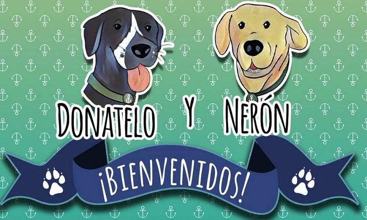 Semar: perritos recatados en Tabasco ya tienen nombre