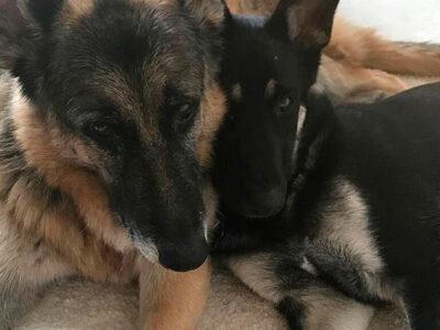 Perros De La Familia Biden