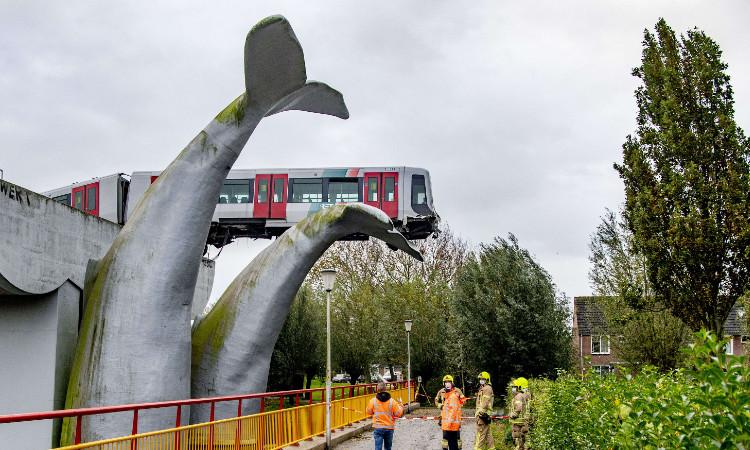 ¡Ver para creer! Tren se salva de accidente gracias a la cola de una ballena en Holanda