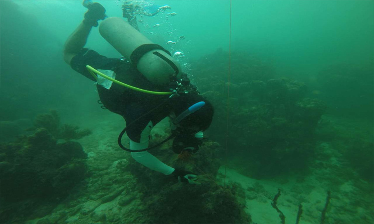 Cura del cáncer: UADY revela investigación en el fondo del mar
