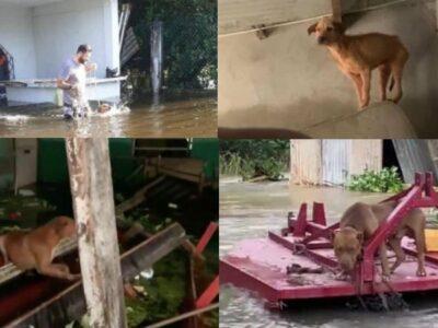 ANIMALES TABASCO